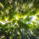 Životné prostredie na úrovni regiónov – výsledky dátovej analýzy